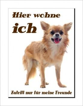 Chihuahua Schild - Hier wohne ich!